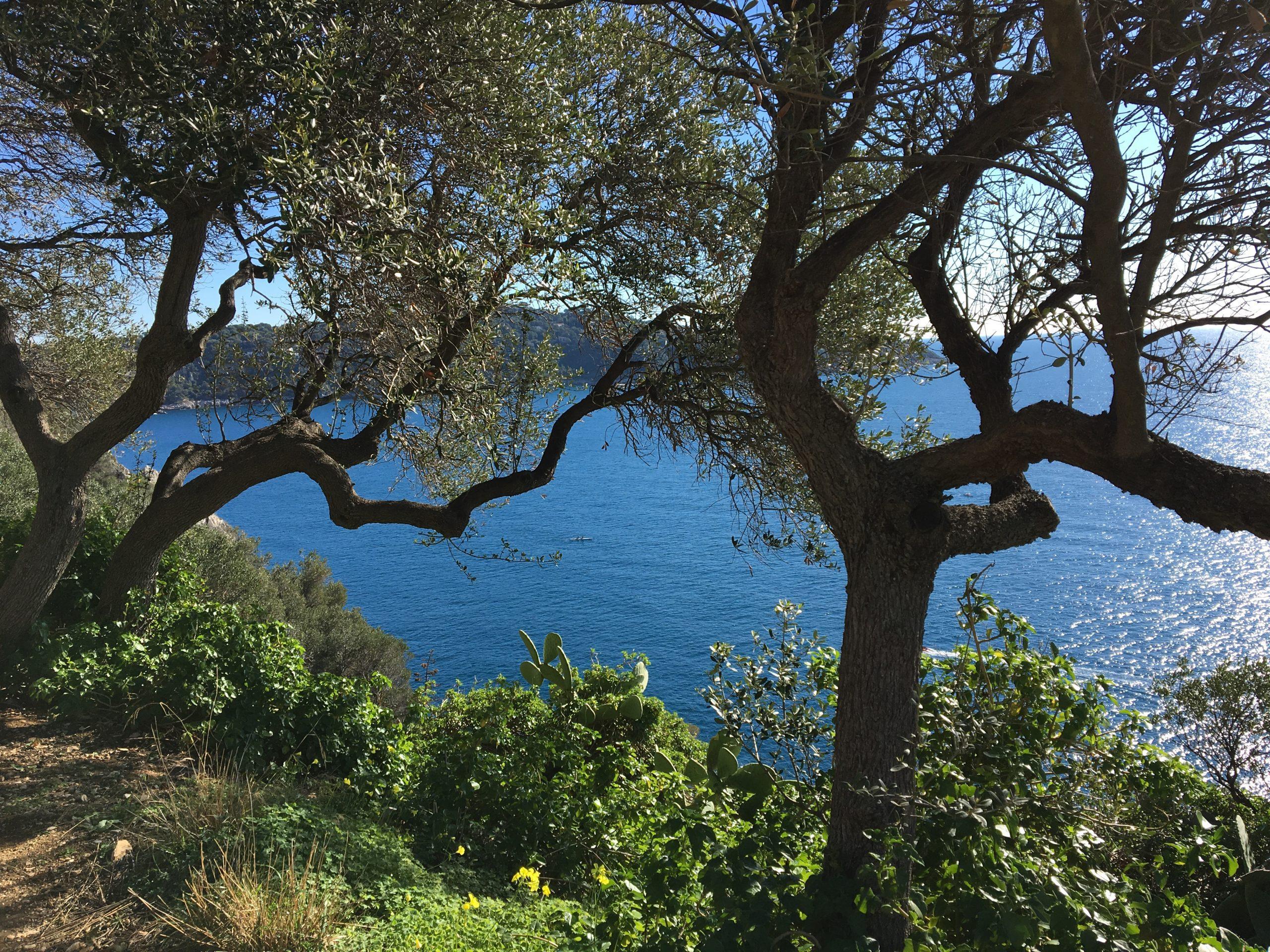 Hypnose / Hypno-Nutrition / Sophrologie / Access Bar à Nice