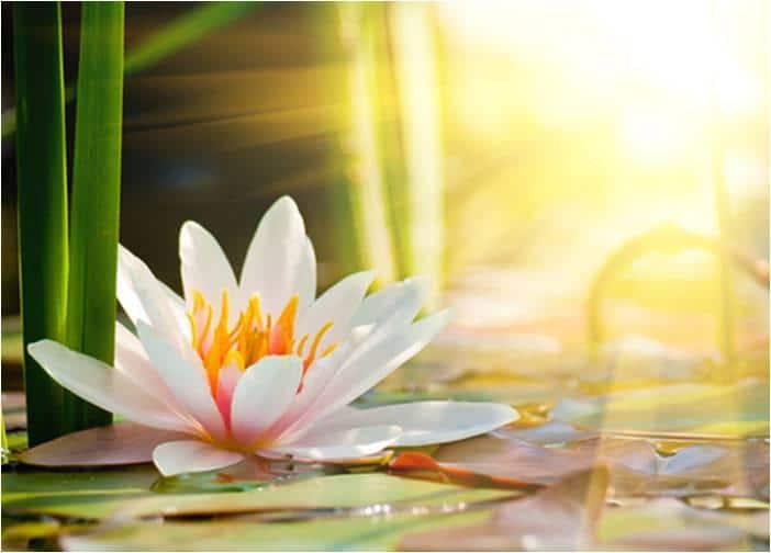 Praticienne et instructrice en relaxation corporelle à COLOMIERS
