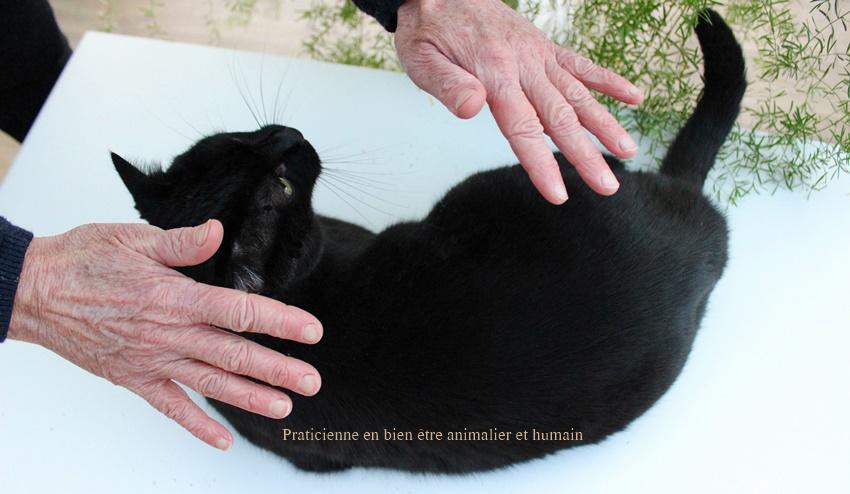 MAGNETISEUR ET COMMUNICATION ANIMALE A DISTANCE