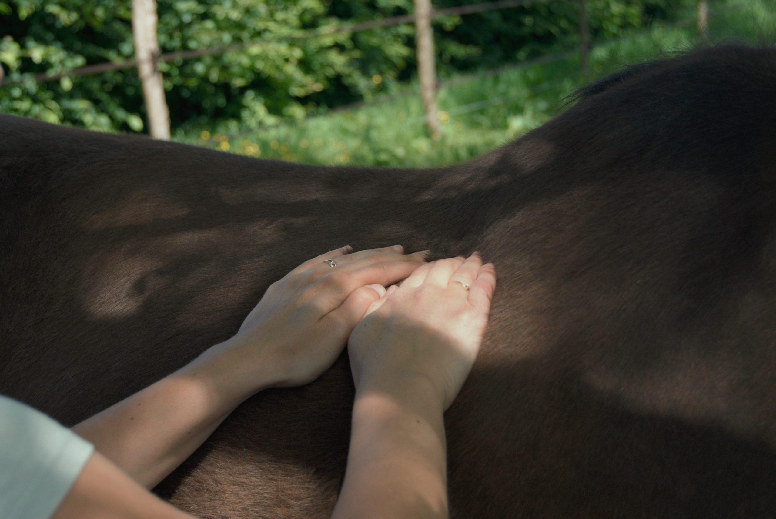 Physio'Dôme - Ludivine Aurelle, masseur animalier certifiée - Bort l'Etang