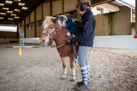 Animal thérapeute : leur bien-être à l'étude
