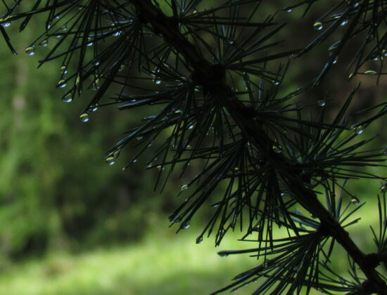 Naturopathe, Soins  Holistique – Pourrieres